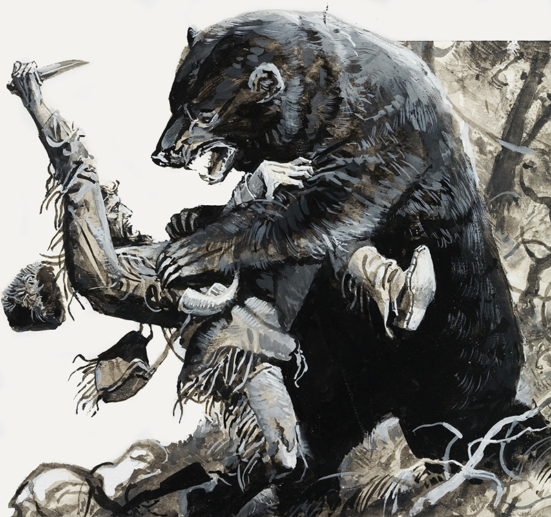 Hugh Glass being savaged by a bear. Original artwork for illustration on p14 of Look and Learn issue no 877 (4 November 1978). Lent for scanning by the Illustration Art Gallery.